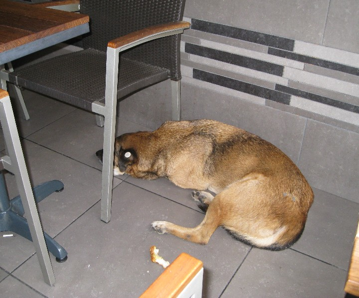 8a99a3ed10 Managing Street Dogs and Cats in Turkey